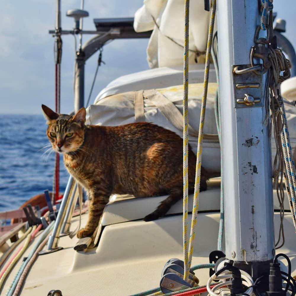 Tefiti The Cat